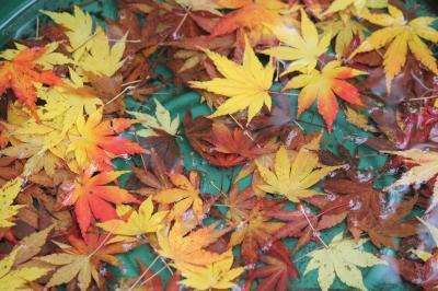 Los colores del otoño 2017