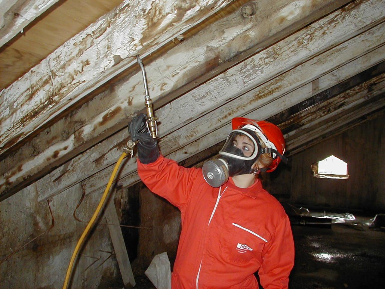 Servicios de fumigación de termitas
