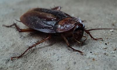 Control de cucarachas Valencia