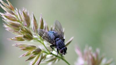 Control de moscas: tipos y características | ROCA Defisan