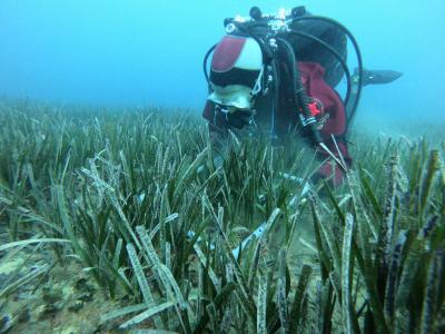 Seguimiento y control de praderas de Posidonia oceanica - OCEANSNELL