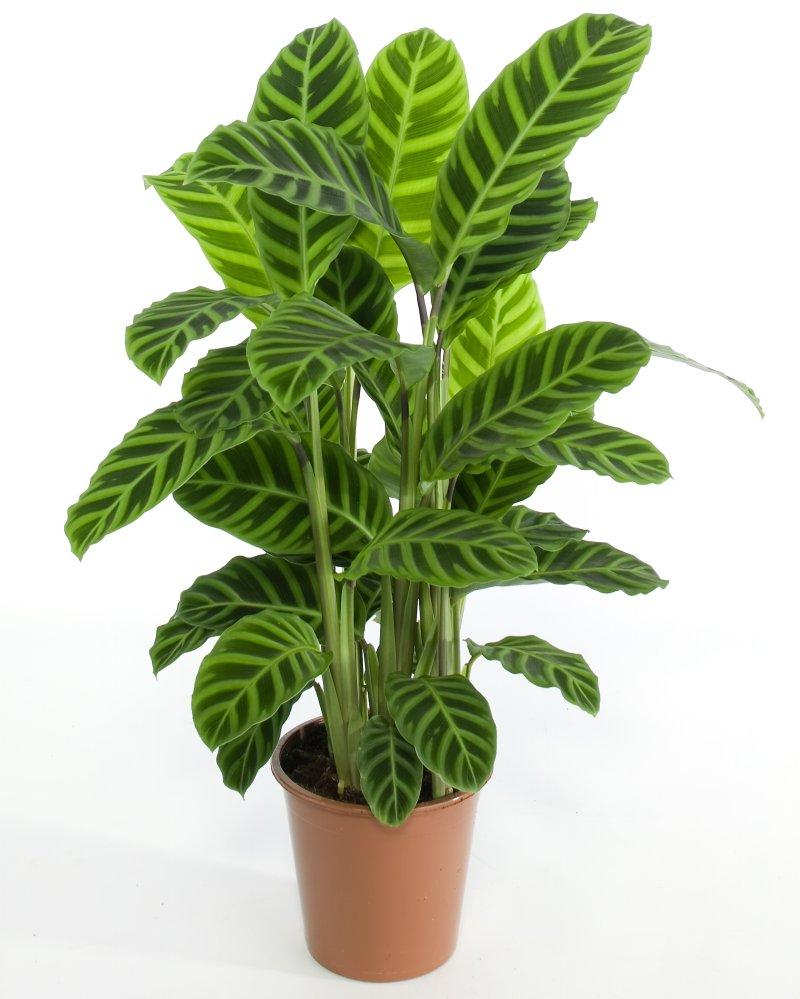 Plantas de interior resistentes clases de jardinaje y - Plantas resistentes de interior ...